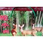 内蒙古狍子肉批发代理价格,呼和浩特哪里有卖狍子肉的多少钱一斤图片