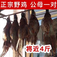 家养狍子肉批发狍子肉整只批发野生狍子多少钱一只