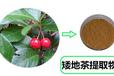 矮地茶提取物不出林提取液葉底珠粉?寧夏固原