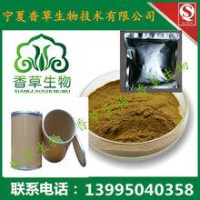 沙棘树灵芝粉报价沙棘树茸提取物原粉100目低温萃取固原