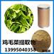 雞毛菜提取物vc胡蘿卜素小白菜纖維粉上海青粉80-100目