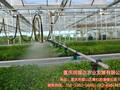润普达农业介绍温室大棚的便利性图片