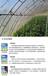 以色列进口农膜温室大棚膜