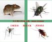 专业除虫灭鼠电话是多少呢图片