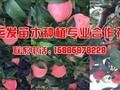 桃树有哪些品种图片