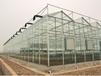 湖州安吉恒溫智能溫室大棚育苗室節能溫室連棟溫室大棚