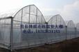伊犁哈薩克溫智能溫室大棚育苗室簡易拱棚連棟溫室大棚