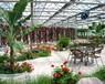 三明泉州漳州恒温智能温室大棚育苗室连栋温室大棚
