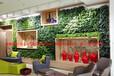 綠植墻,植物墻立體綠化墻,垂直綠化墻