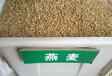 优质燕麦种子多少钱一斤
