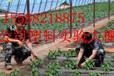红豆种子多少钱一斤