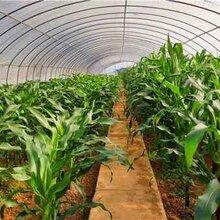 温室大棚骨架养殖大棚钢管蔬菜大棚钢管农业钢架温室种植大棚配件图片