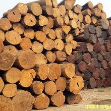 上海缅甸柚木原木缅甸柚木价格缅甸柚木厂家图片