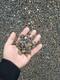 陶粒回填图