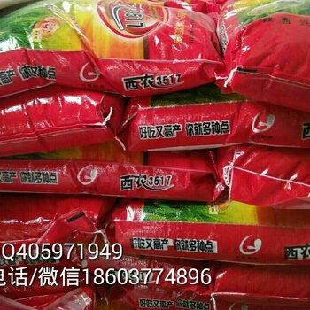 供应高产稳产半冬性强筋小麦品种西农3517