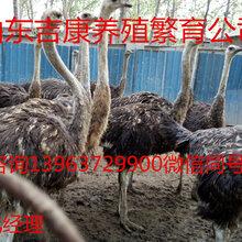孔雀鴕鳥羊駝多少錢一只圖片
