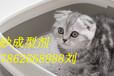 純植物貓砂成型劑快速清潔新型加工成型助劑