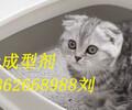 纯植物猫砂成型剂快速清洁新型加工成型助剂
