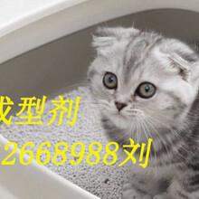 貓砂粘合劑貓砂黏合劑推薦好品牌純植物膠粘圖片