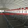 松坤猪场自动化料线赛盘料线链条传动形式定位栏料线