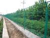 安平高速公路护栏网价格/公路隔离栅/绿色护栏隔离网道路护栏网厂