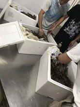 如何進口澳洲大龍蝦?龍蝦青蟹進口清關流程