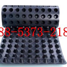 《行业推荐》许昌塑料疏水板价格图片