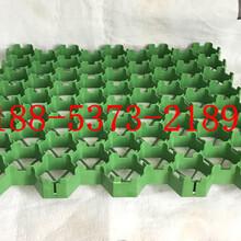 (最新资讯)永优游平台1.0娱乐注册优质植草格价格图片