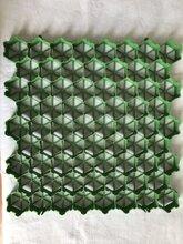(最新资讯)湖南塑料植草格价格图片