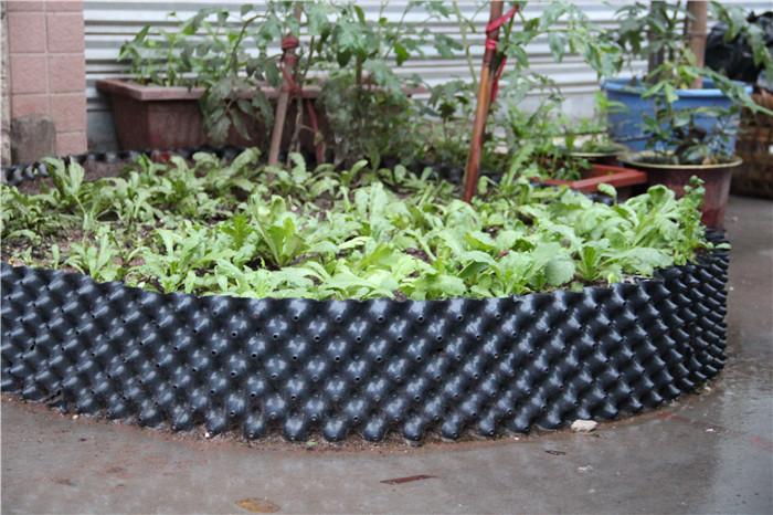 普洱如何使用植树控根容器