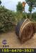 惠州树木控根容器价格