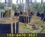 徐州种植绿化树控根器行情