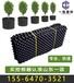 东莞50孔控根育苗容器厂商出售