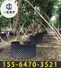 南通果树专用控根器资讯