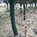 黑河植物保溫帶廠家批發