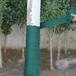 合肥包树的布供应厂家