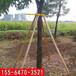 紹興加固樹木的支撐架價格行情
