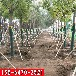 泰安苗木保護固定支架市場報價
