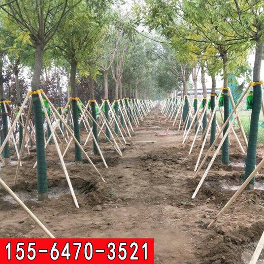 河南園林綠化樹木支架現貨批發