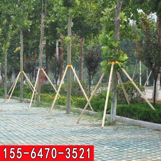 新疆樹木三角支架歡迎咨詢