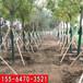 泰安樹木支撐黃色套筒廠家報價
