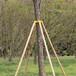 榆林綠化樹木支撐架套批發出售