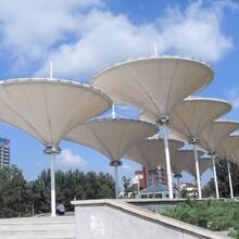 阳江膜结构景观棚,膜结构张拉棚图片