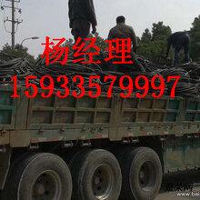 石家庄市栾城县电线电缆回收上门回收