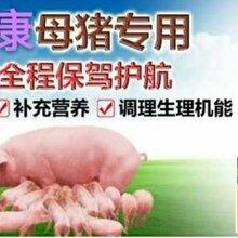 母猪用什么药保健好母猪吃什么下仔多母猪长得好就用诸安康