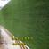 工地墙面塑料草坪