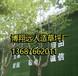 安国围墙绿色仿真草坪供求信息