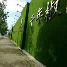 金昌绿植草皮墙专业制造商图片