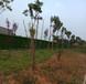 南平绿植草皮多少钱每平米