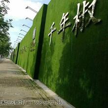 工地围墙人造草皮《价格多少》_独山子区价格低的图片